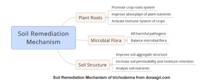 trichoderma mode of action