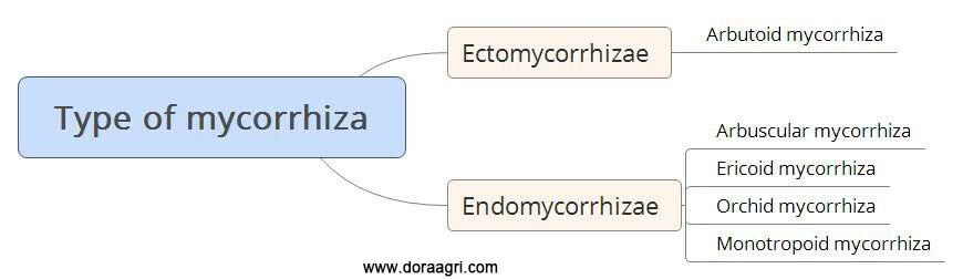 Type-of-mycorrhiza fungi