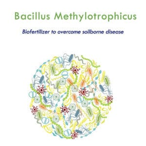 Bacillus methylotrophicus