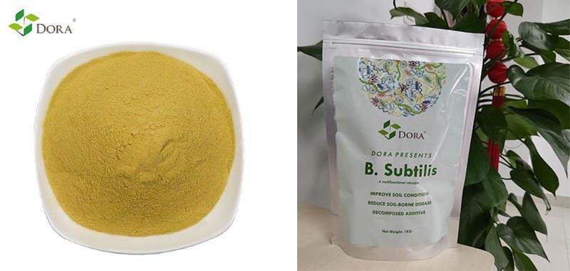 bacillus subtilis biofertilizer