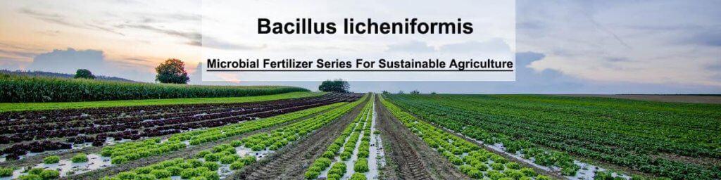 Bacillus licheniformis products