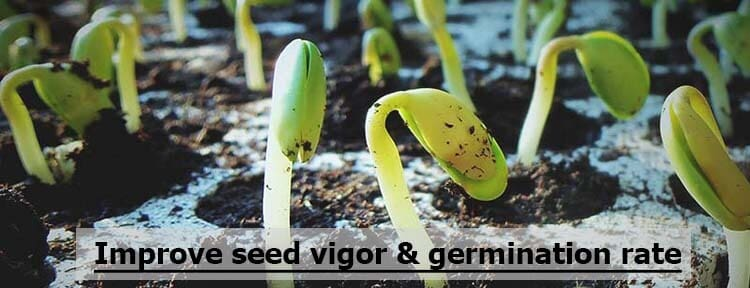 improve seed germination rate