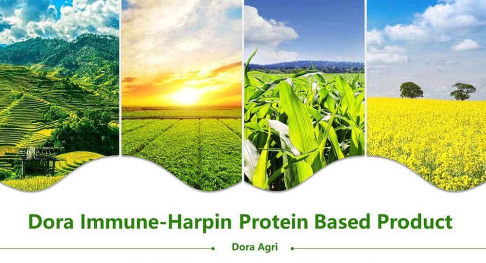 Harpin Protein based products
