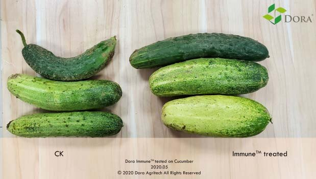 harpin protein on cucumber