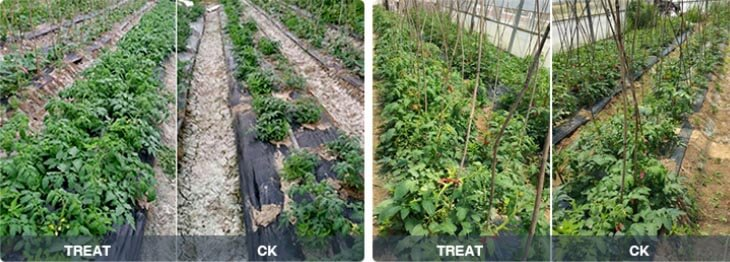 Trichoderma Alleviate soil salinization