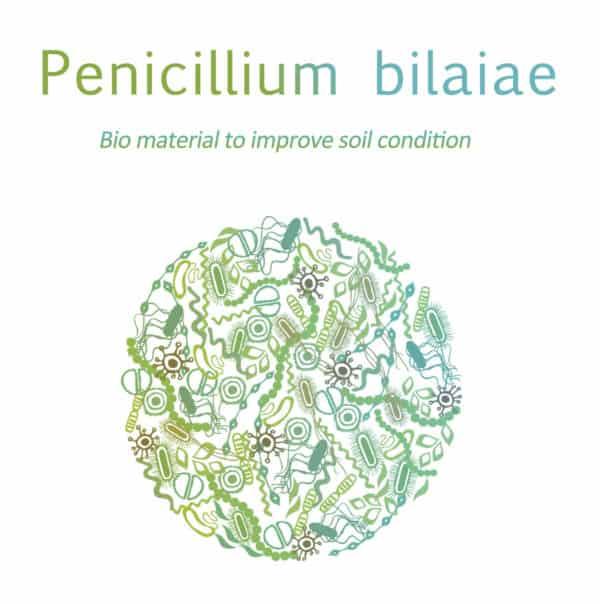 Dora Penicillium bilaiae