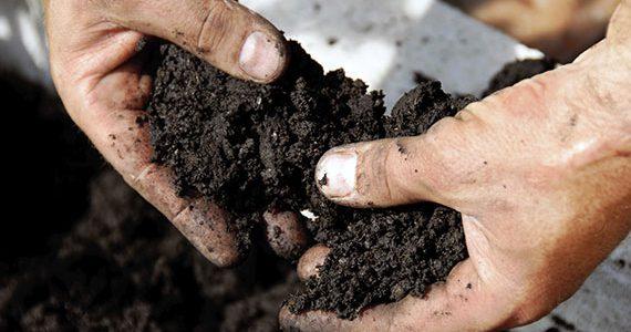 Improve soil Condition