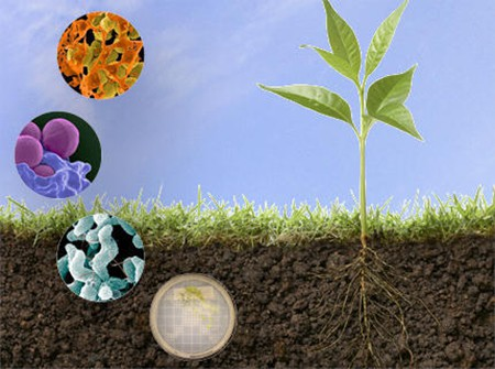 Microbial fertilizer