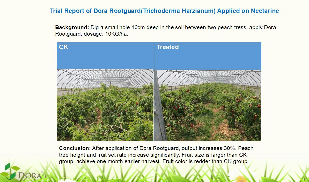 Trichoderma harzianum + humic acids