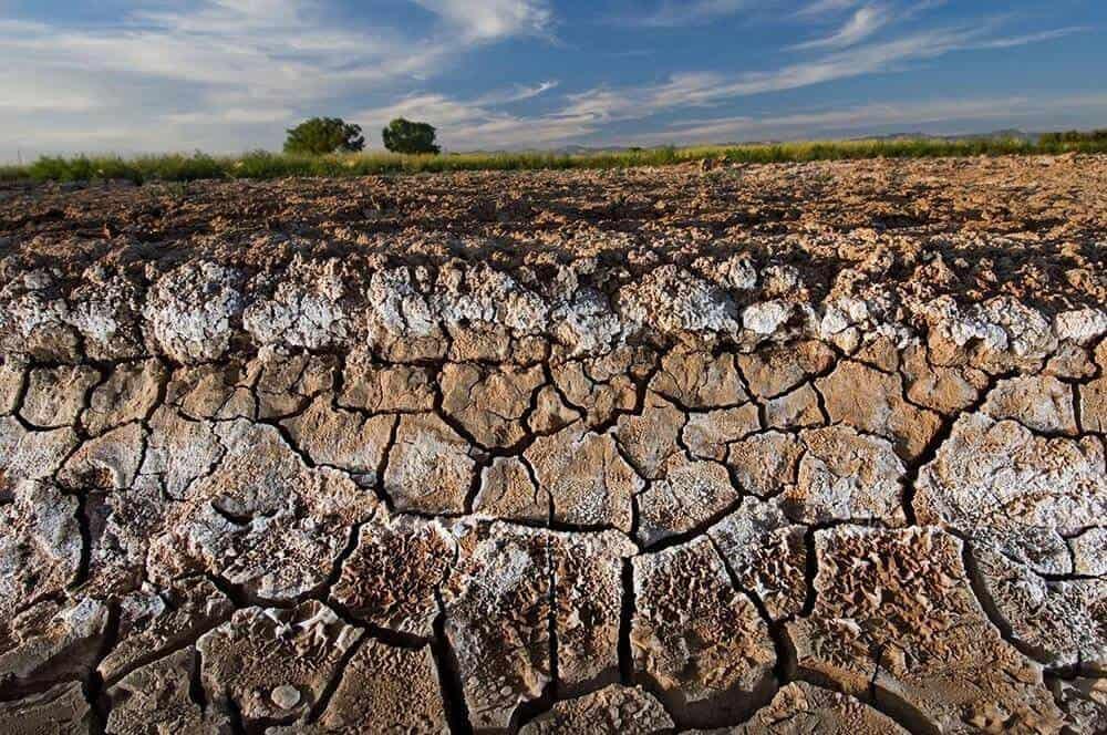 soil-salinization