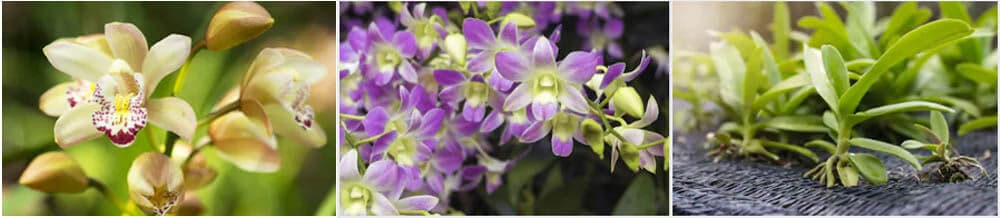 fertilizer for orchids to bloom