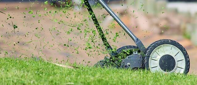 Best fertilizer for lawn