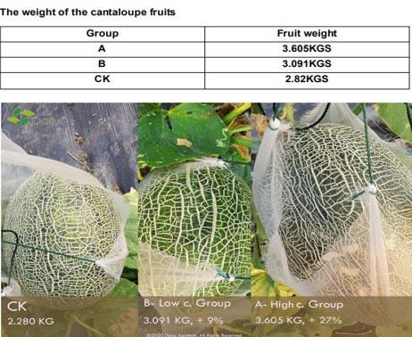 Kelpreal for melon yields