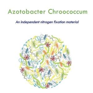 Azotobacter chroococcum