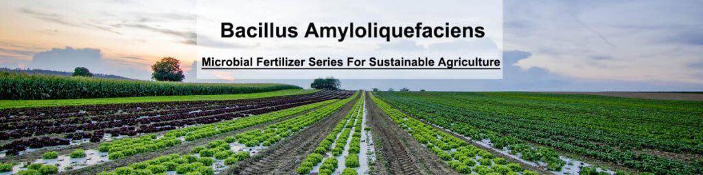 bacillus amyloliquefaciens
