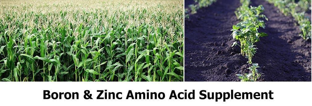 Boron & Zinc amino acid chelate