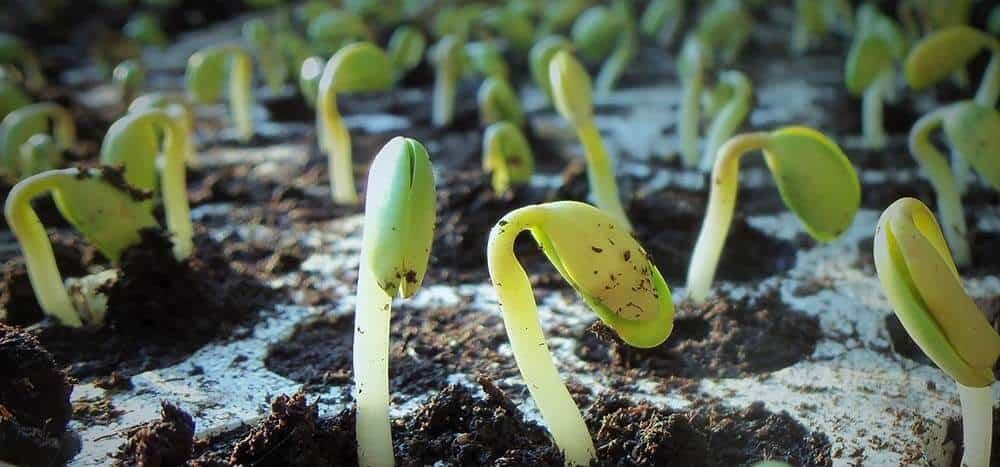 microorganisms fertilizer