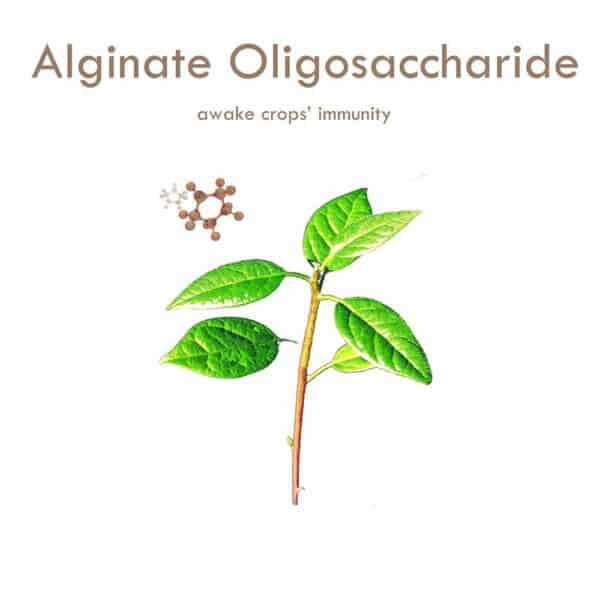 Dora alginate oligosaccharide