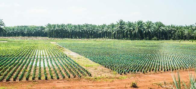 palm tree fertilizer