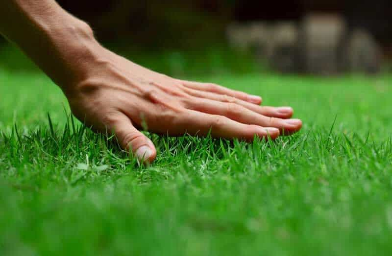 Lawn-pest-control