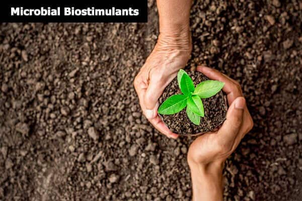 Microbial biostimulants products