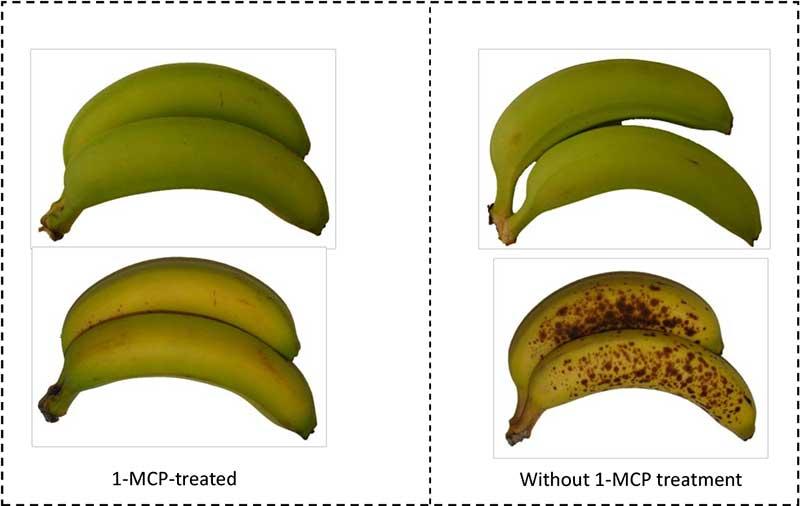 1-MCP-on-banana