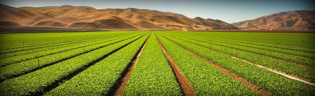 Ga3 for modern farming