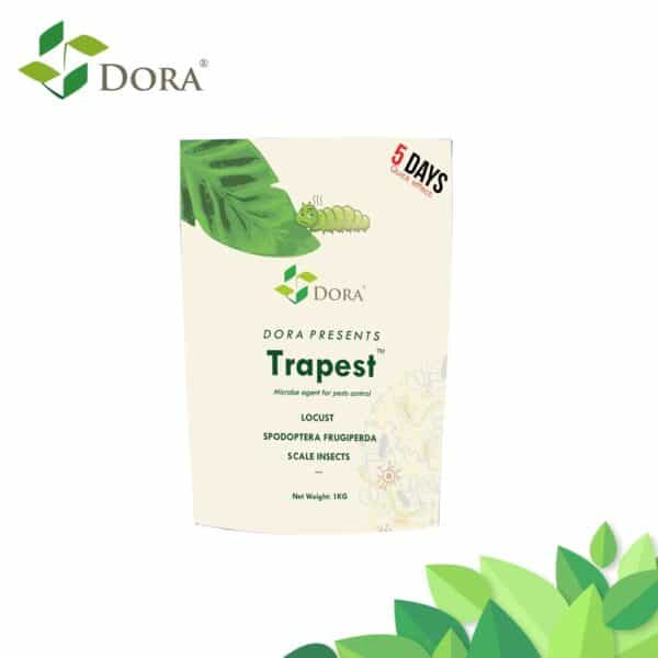 trapest-Lepidoptera insecticide