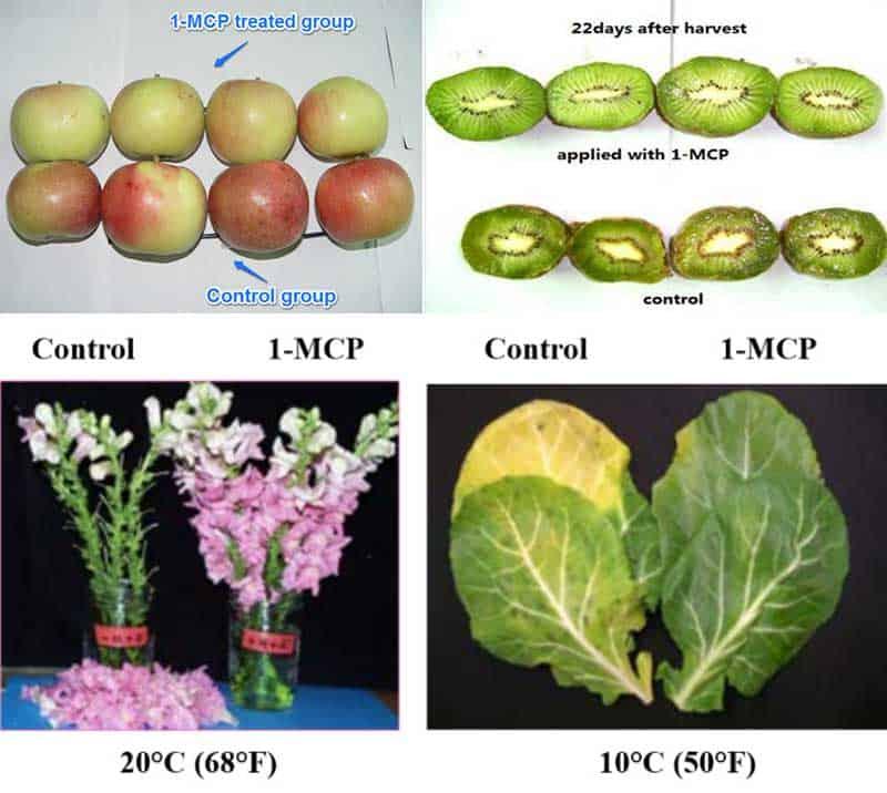1-MCP for apple kiwifrutis flowers