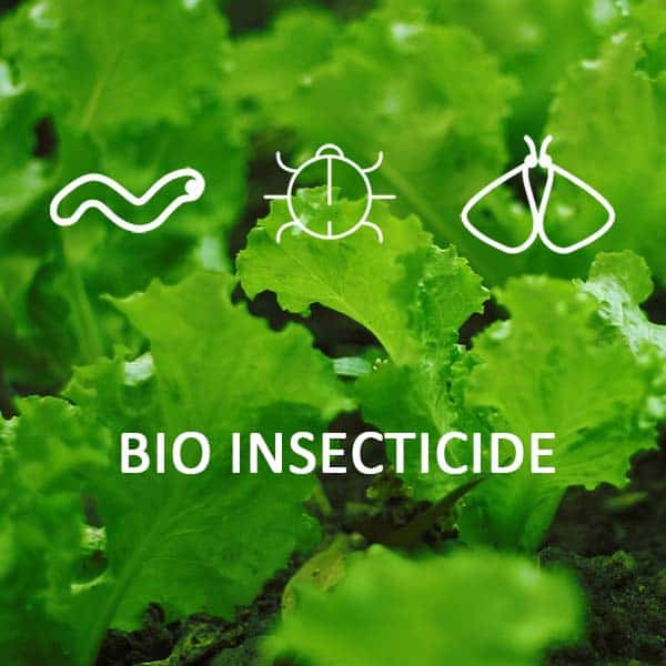 Organic BIOINSECTICIDE