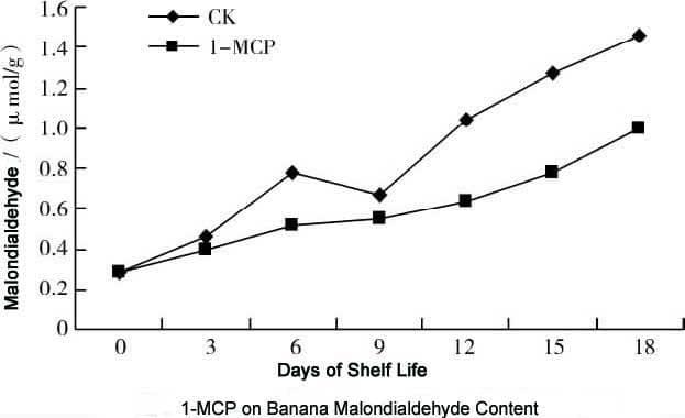 1-MCP on Banana malondialdehyde