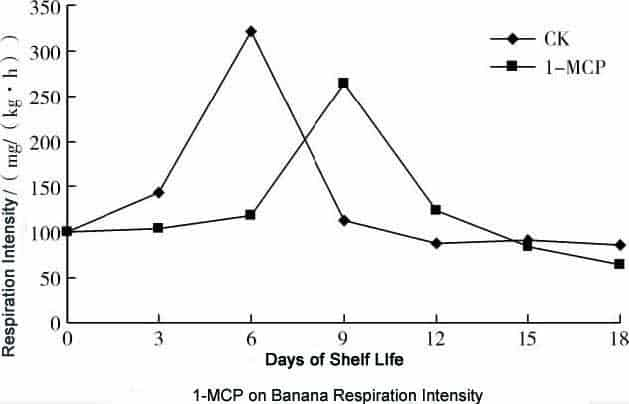 1-MCP on Banana respiration intensity