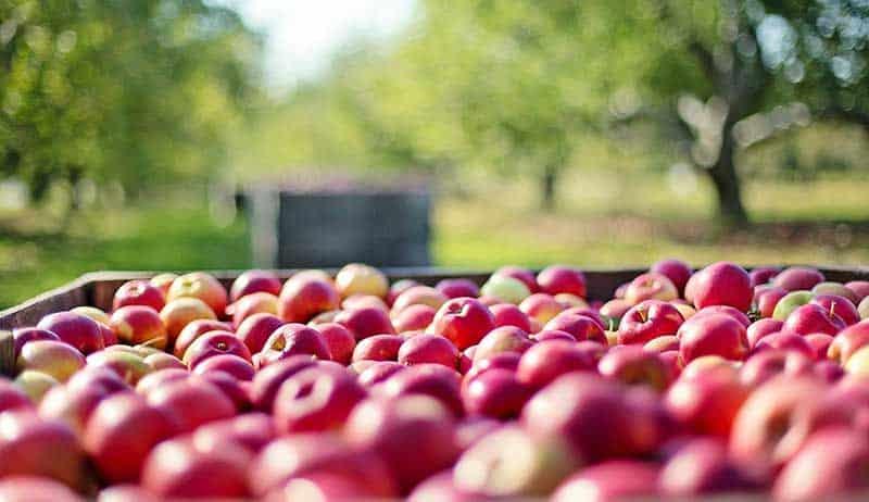 1-MCP on apple