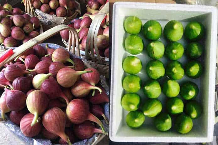1-MCP on fruits figs