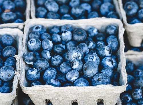 1-MCP on Blueberry storage