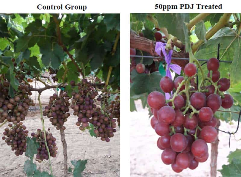 Propyl Dihydrojasmonate on grape